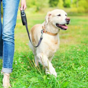 Protect from Dog Theft